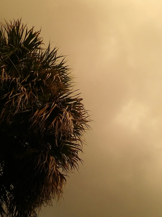 Gray as the sky Photograph by Andrea Mendoza / FOAP