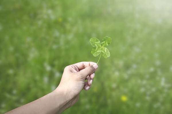 Hand holding a four leaf clover in a green field Photograph by Paper Boat Creative