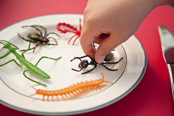 Hand reaching for insects on a plate Photograph by Jenny Dettrick