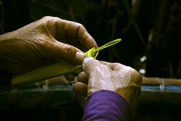 Hands form a palm leaf into a small work of art Photograph by Bernd Schunack