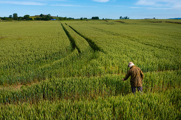 High angle view of a senior man checking a crop Photograph by JohnFScott