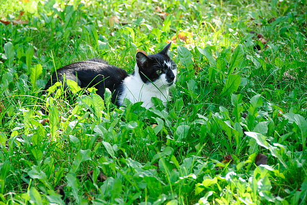 High Angle View Of Cat Relaxing On Grassy Field Photograph by Piotr Hnatiuk / EyeEm