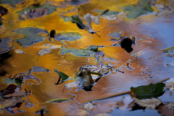 High Angle View Of Leaves On Puddle Photograph by Paulien Tabak / EyeEm