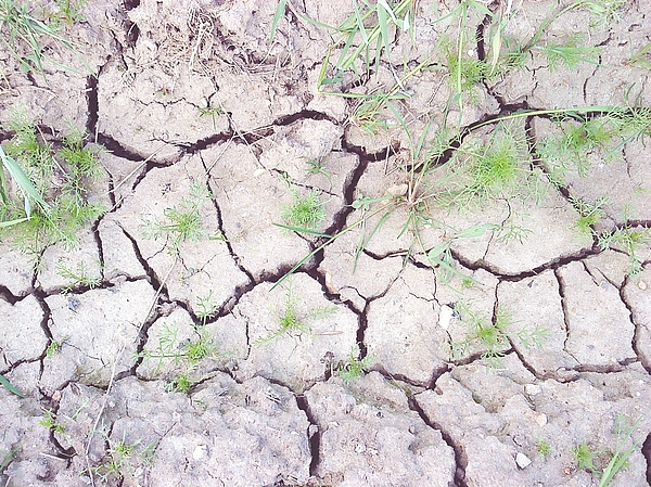 High Angle View Of Plants Growing On Drought Land Photograph by Benny Weis / EyeEm