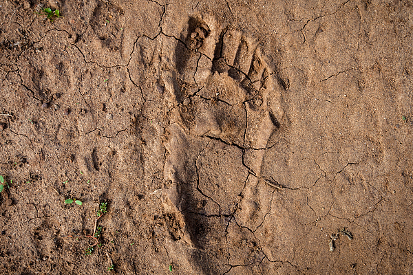 Human footprint in the East-African desert (Malawi) Photograph by Guido Dingemans, De Eindredactie