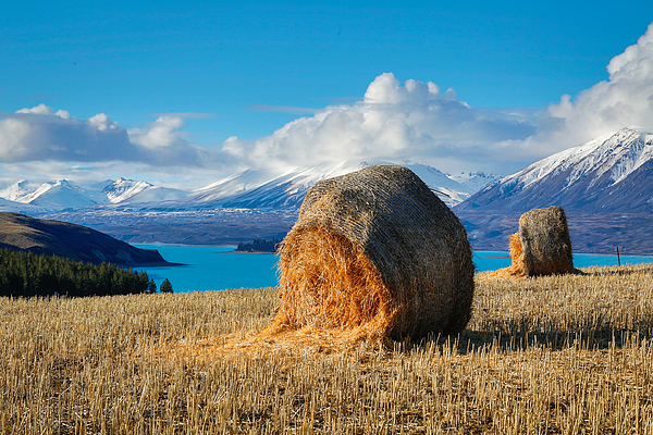 Lake Tekapo with hay bales and mountain background Photograph by Lingxiao Xie