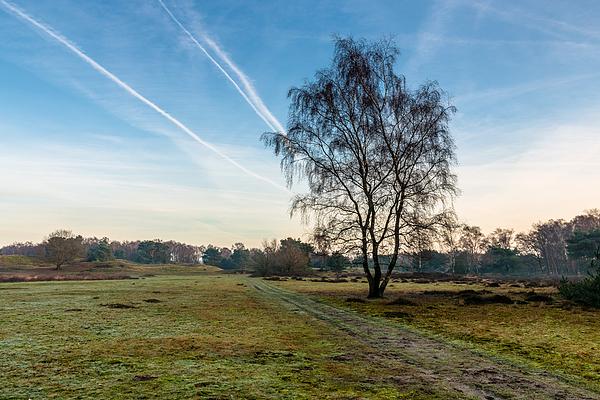 Lines Photograph by William Mevissen