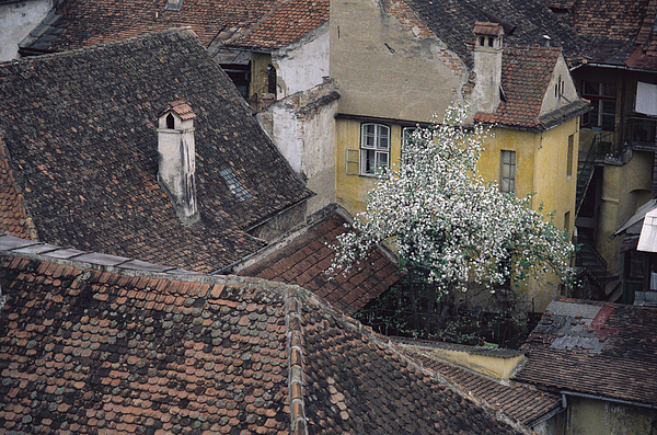 Looking Down On Shingled Roofs And Buildings With Their Chimneys And Trees Photograph by Rubberball/Heinz Hubler