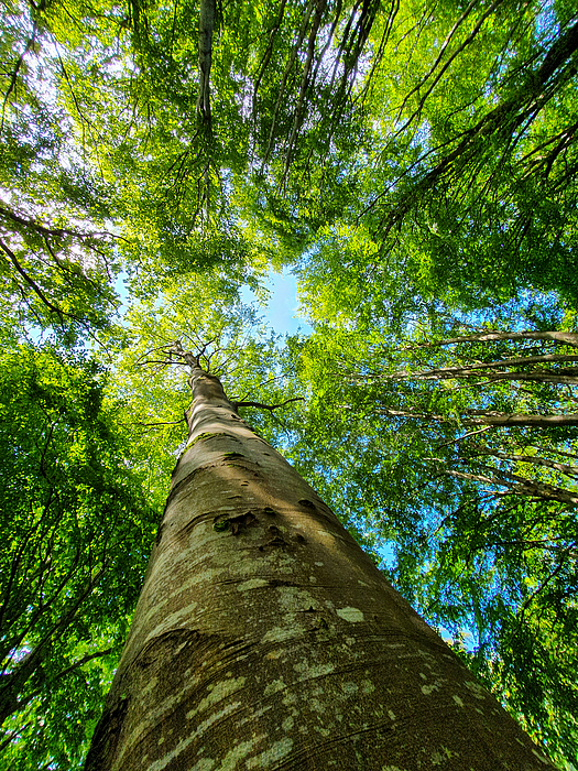 Looking up in the forest Photograph by Catherine MacBride