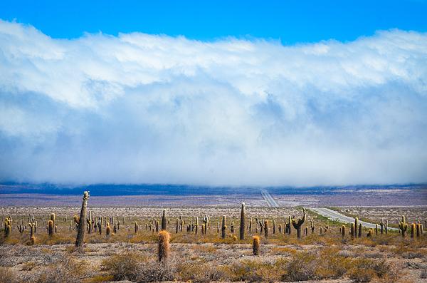 Los Cardones National Park, Salta, Argentina. South America Photograph by Marcos Radicella