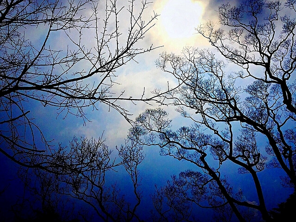 Low Angle View Of Bare Trees Against Blue Sky Photograph by Pinchuan Chen / EyeEm