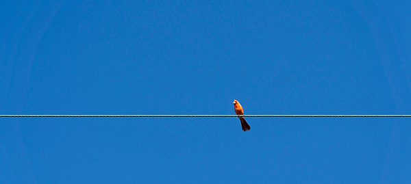 Low Angle View Of Bird Perching On Cable Against Clear Blue Sky Photograph by Jesse Coleman / EyeEm
