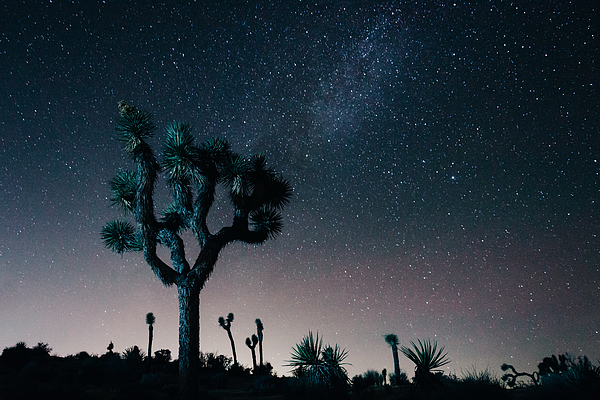 Low Angle View Of Joshua Tree Against Sky Photograph by Brian Mok / EyeEm
