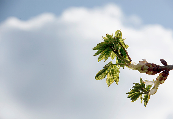Low Angle View Of Plant Against Cloudy Sky Photograph by Paulien Tabak / EyeEm