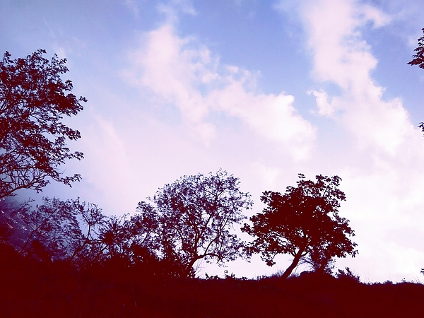 Low Angle View Of Silhouette Trees Against Cloudy Sky Photograph by Paritosh Kulkarni / EyeEm