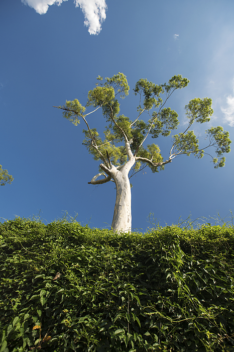 Low angle view of tree Photograph by Owngarden
