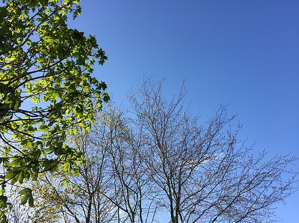 Low Angle View Of Trees Against Blue Sky Photograph by Paulien Tabak / EyeEm