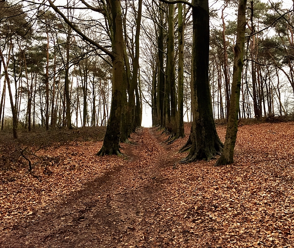 Low Angle View Of Trees In Forest Photograph by Paulien Tabak / EyeEm