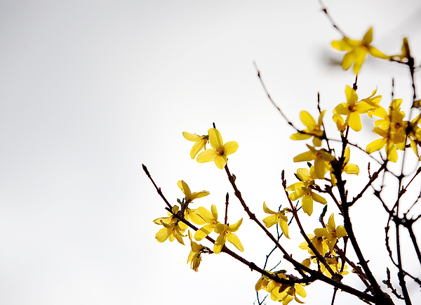 Low Angle View Of Yellow Flowers Photograph by Paulien Tabak / EyeEm
