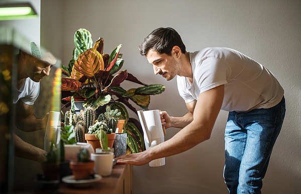 Man watering cacti plants in his living room Photograph by Luis Alvarez