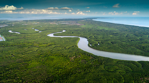 Mangrove  Forest  And River Photograph by Somnuk Krobkum