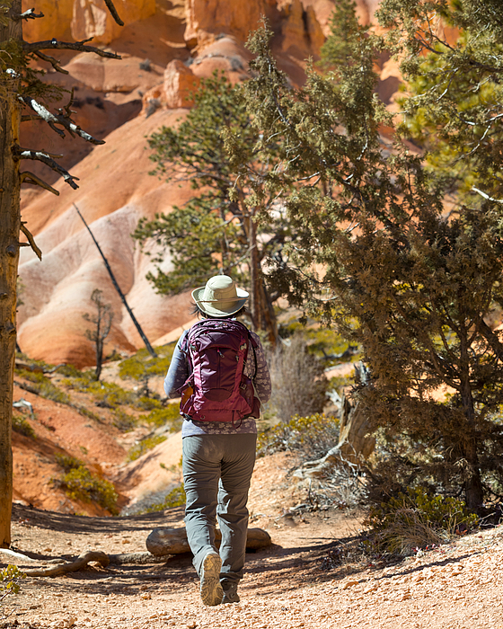 Mature Woman Hiking Bryce Canyon National Park Queens Garden Trail. Photograph by Nycshooter