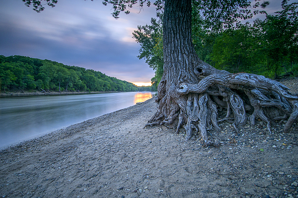 Mississippi Tree Root Photograph by Ryan W Brown