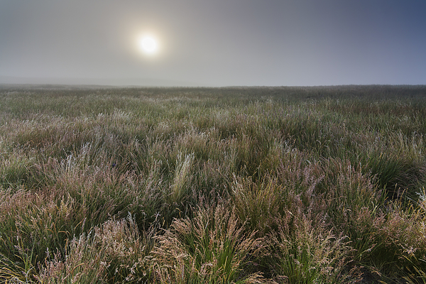 Misty dawn in the field Photograph by Anton Petrus