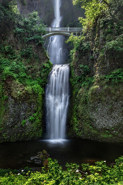Multnomah Summer Photograph by Tom Grubbe