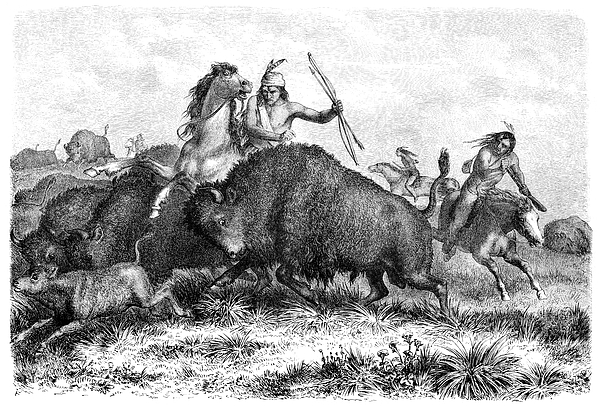 Native americans hunting buffalos with bow and arrow 1862 Drawing by Grafissimo