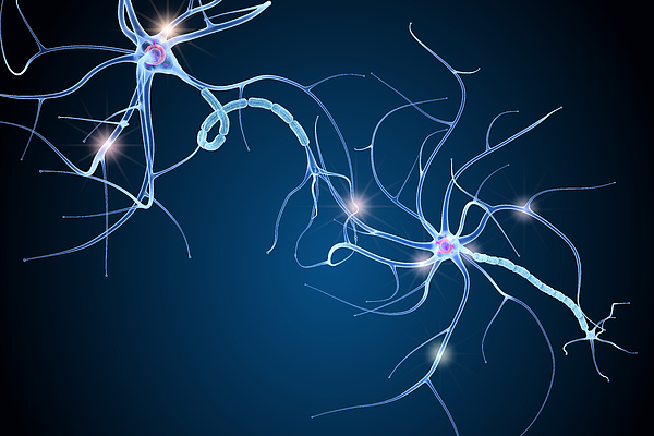 Nerve cell anatomy in details. 3D illustration Photograph by Alex-mit