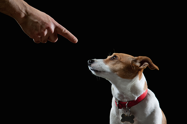 Obedient Dog Photograph by PM Images