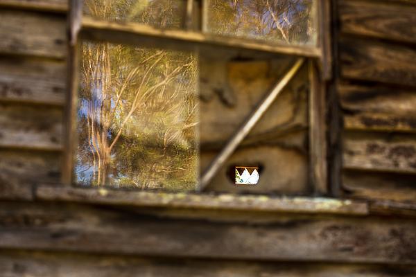 Old Window Photograph by Lianne B Loach