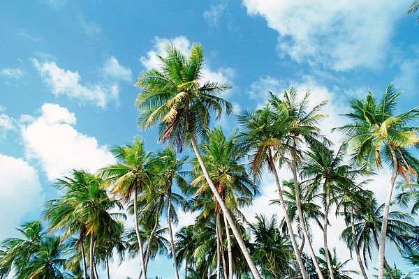 Palm grove Photograph by James Hardy