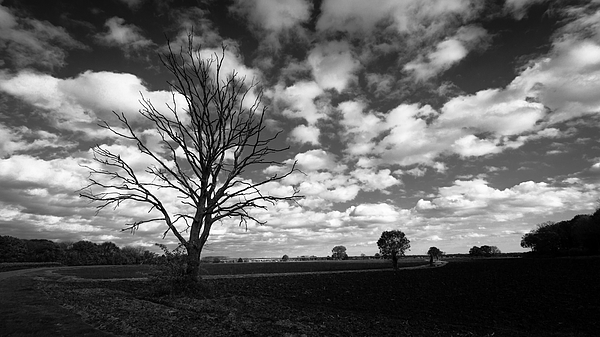 Path Of Trees (B&W) Photograph by William Mevissen