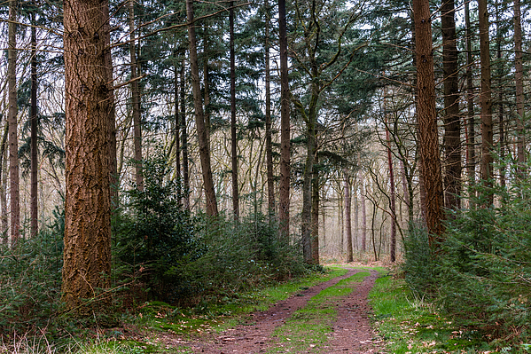Path Of Trees Photograph by William Mevissen