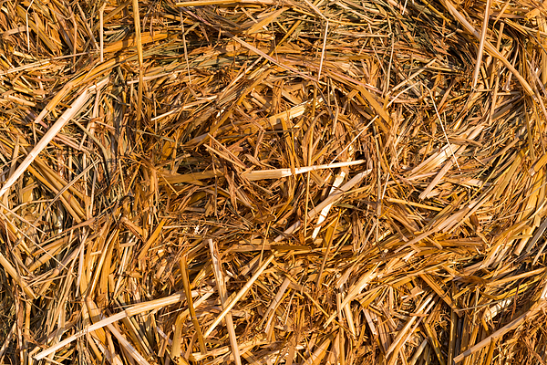 Piled hay bales Photograph by R.Tsubin