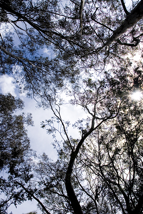 POV of treetops and blue sky Photograph by Lyn Holly Coorg