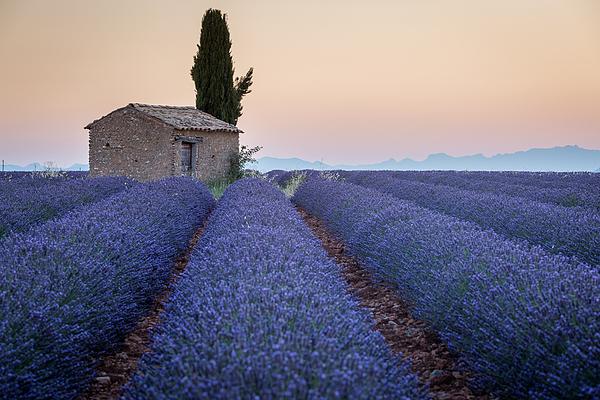 Provence, Lavander Field Photograph by Francesco Riccardo Iacomino
