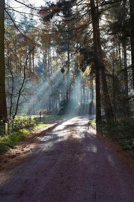 Rays of light through a forest Photograph by Heidi Coppock-Beard