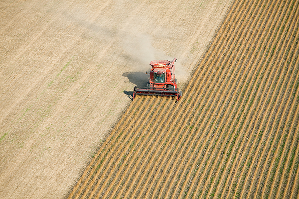 Red Combine Harvesting Fall Soybean Field Aerial Photograph by BanksPhotos