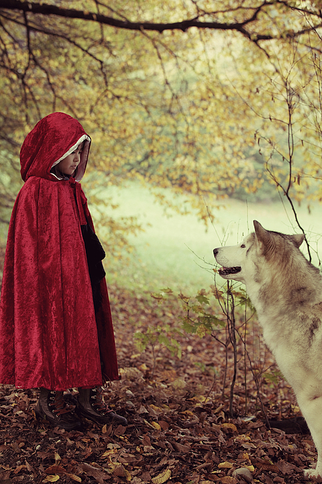 Red riding hood face to face with big bad wolf Photograph by Susan.k.