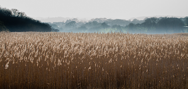Reeds Photograph by s0ulsurfing - Jason Swain