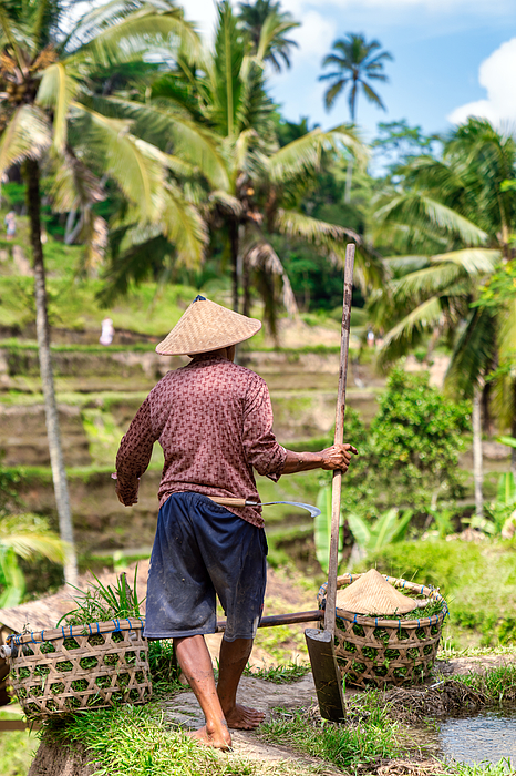 Rice Farmer Works At Tegallalang Rice Terrace, Ubud, Bali Island Photograph by Mauro Tandoi