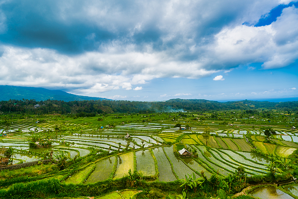 Rice paddy heaven in the Karangasem Regency of Bali, Indonesia Photograph by Mauro Tandoi