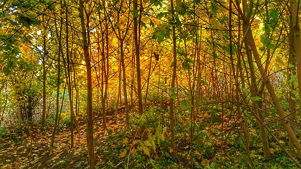Scenic View Of Autumn Forest Photograph by Stanislav Tcolov / FOAP