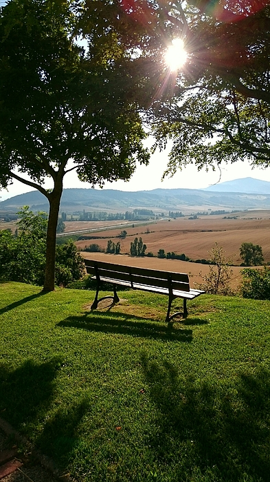 Scenic View Of Bench On Grassy Field By Trees Against Sky Photograph by Pako Muñoz / EyeEm