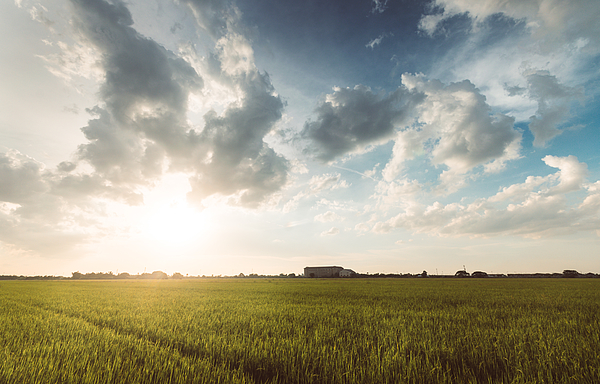 Scenic View Of Cornfield Against Sky During Sunset Photograph by Sakchai Vongsasiripat