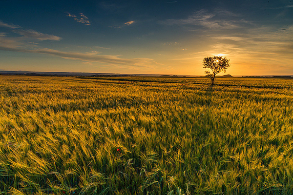 Scenic View Of Farm Against Sky During Sunset Photograph by Ralf Schastok / EyeEm