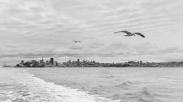 Seagulls Flying Over Sea Against Sky Photograph by Jesse Coleman / EyeEm